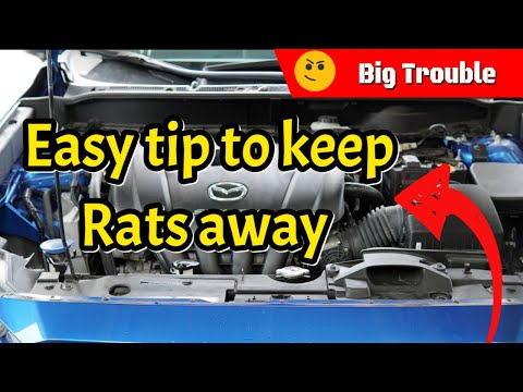 Easy Tip To Keep Rodents, Mice & Rats Out Of Your Engine Bay