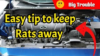 How To Keep Rats Out Of Vehicle Truck Car Engine - mp3 مزماركو تحميل اغانى