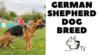 The German Shepherd Dog Breed   everything you need to know!  DogCastTV!