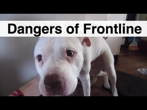 Dangers of Frontline - Frontline Poisoning - Frontline Dog Side Effects