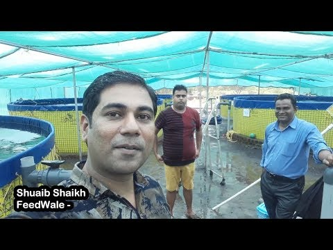 RAS Fish Farming | Cage Culture Fish Farm | Aquaponics | Water Filtration All In One Farm In India