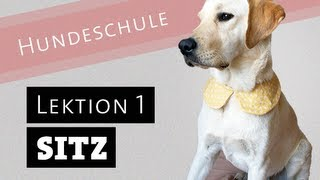 Hund Sitz Beibringen Wie Bringe Ich Meinem Hund Sitz Bei Welpe Befehl Deutsch Video Labrador