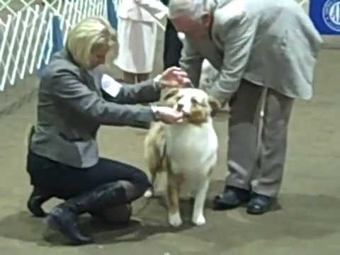 2008 CONFORMATION DOG SHOW ~ Monroe, WA 3 of 3