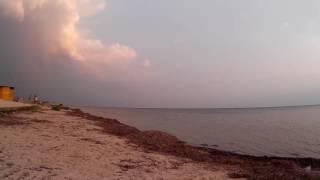Чайки возле берега моря  Хорлы  Херсонская область  Украина