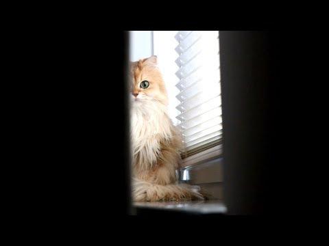 THE CUTEST HORROR MOVIE TRAILER – Cat Parody
