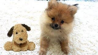 Возвращение КУМА ЧАН. Собаки блогеры и их клички. Как назвать мою собаку!
