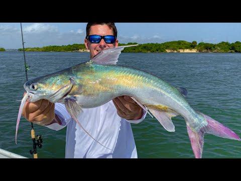 TOXIC Catfish...Catch Clean Cook- Gafftopsail Catfish (Sebastian Inlet, Florida)