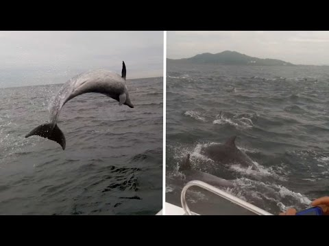 Kevin & Liz - Dolphin pod surrounds boat