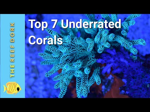 Top 7 Easy (ish) Underrated Corals