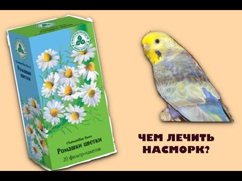 Чем лечить насморк у попугая?