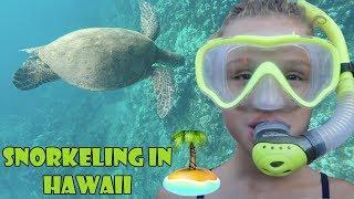 Snorkeling in Hawaii 🏝 (WK 343.5) | Bratayley