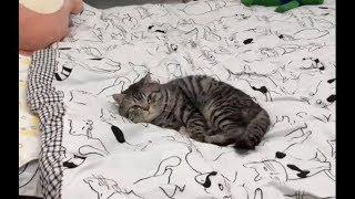 【TikTok抖音】新鋪的床單會長貓?這是家裏有礦吧,這樣的床單給我來一打