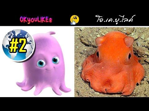 ค้นพบปลาหมึก หน้าตาน่ารัก คล้ายตัวการ์ตูนในเรื่อง นีโม : OKyouLIKEs NEWS #2