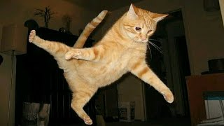 Cats are so funny you will die laughing - Funny Cats Compilation