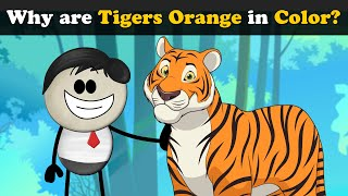 Why are Tigers Orange in Color? + more videos   #aumsum #kids #science #education #children