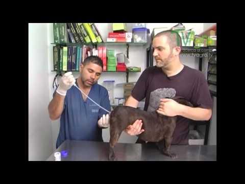 Proceso y cuidado en la inseminación...