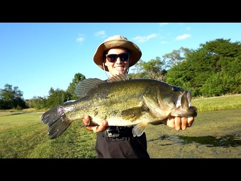 How to catch giant bluegills in public lakes doovi for Pond bass fishing tips