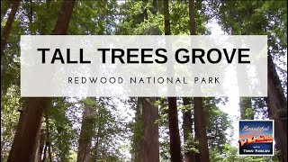 Redwood National Park, CA: Tall Trees Grove