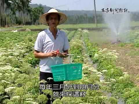 花蓮中藥材農業