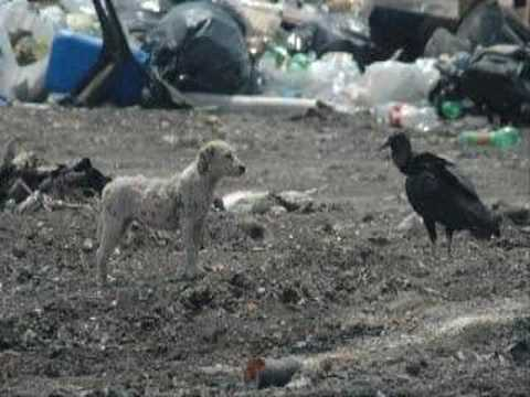 IFAW Community Led Animal Welfare (CLAW) Cozumel, Mexico