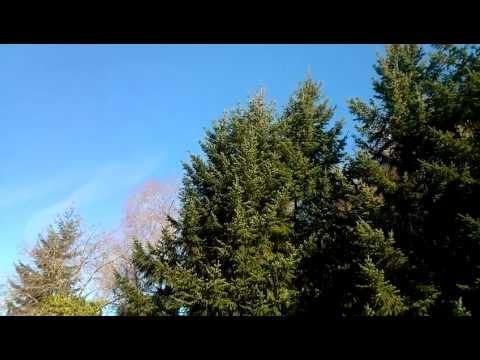 LG Spectrum from Verizon Video Sample