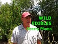 WILD EDIBLES - Cherry Plums