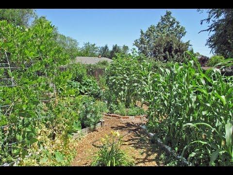 Urban Backyard Food Forest Tour (Year 3)