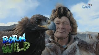 Born to Be Wild: How the Kazakhs hunt with their Golden Eagles