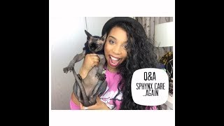 Q&A || Answering your questions about owning a Sphynx