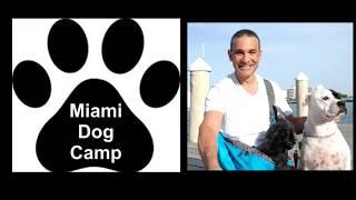 Miami Dog Walker Beach Day