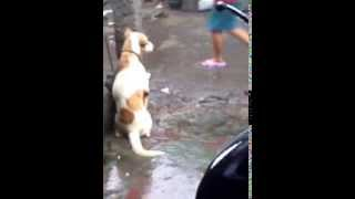 Repeat youtube video Dog Abuse - This Dog is Amazing! But his owners are not!