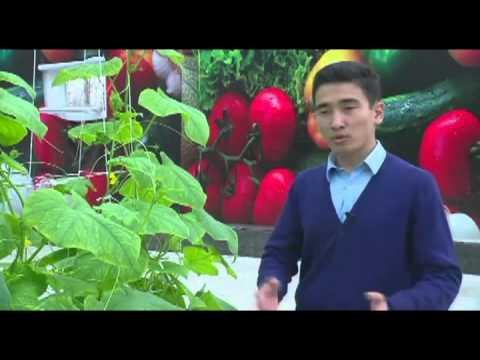 Зеленая экономика 24kz