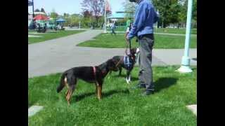 Clicker Training 'look At That' Lat Game -teaching Dogs To Focus And Eye Contact
