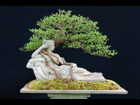 Bonsai at the RBG,  June Show 2014