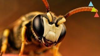 ¿Qué pasaría si se extinguieran las abejas?