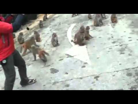 猴年旺角衝突Q版