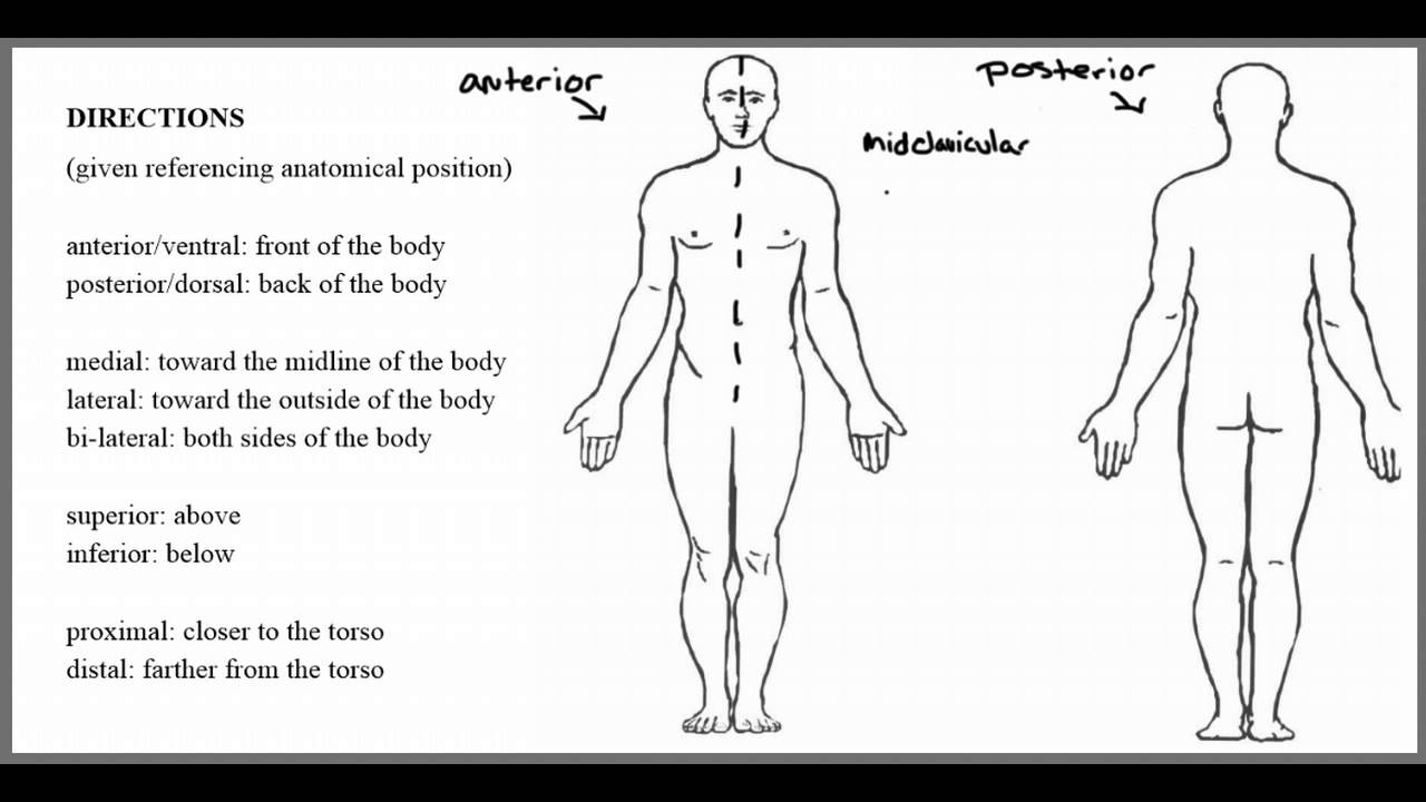 Body Positions Planes And Directions Youtube