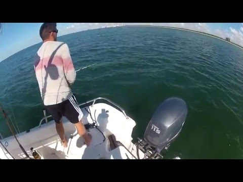 4ft Scalloped Hammerhead Shark hits on surface