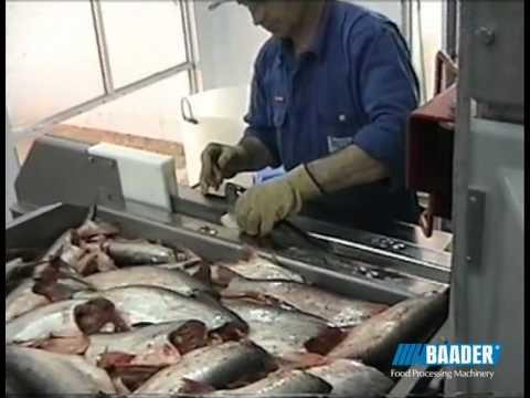 catfish cleaning machine