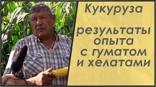 видео Состав зерна кукурузы