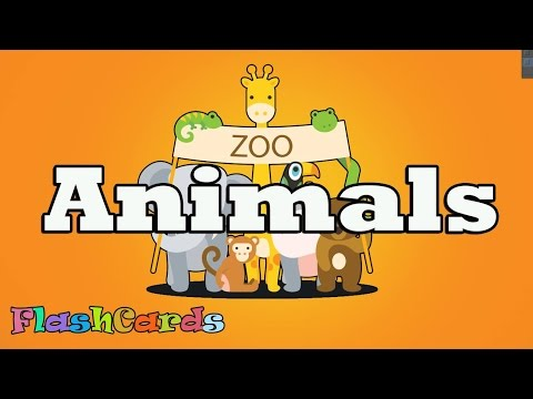 image regarding Zoo Animal Flash Cards Free Printable known as [Flashcards for small children - Pets] Youngsters study/exploration animal Free of charge Printable Flash Playing cards
