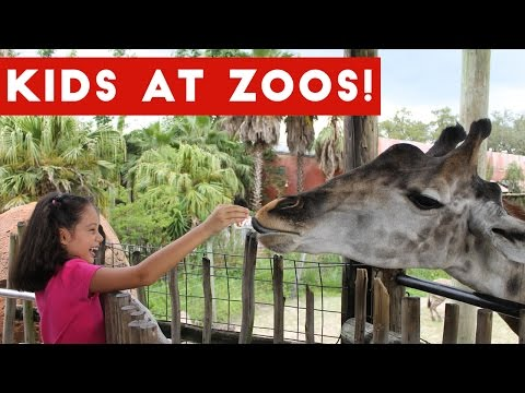 Funniest Kids at the Zoo Reactions Compilation October 2016 | Funny Pet Videos
