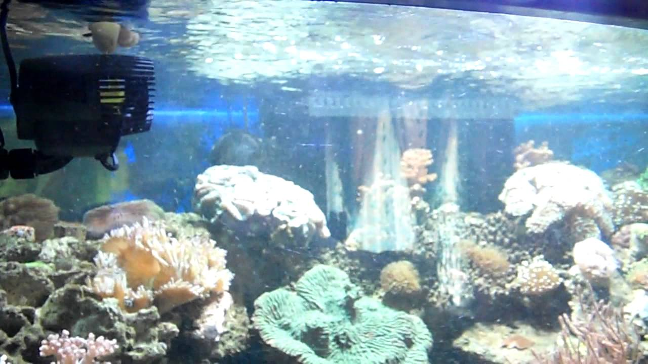 Visualisation du flux d 39 eau g n r par une pompe aquarium for Aquarium vpc