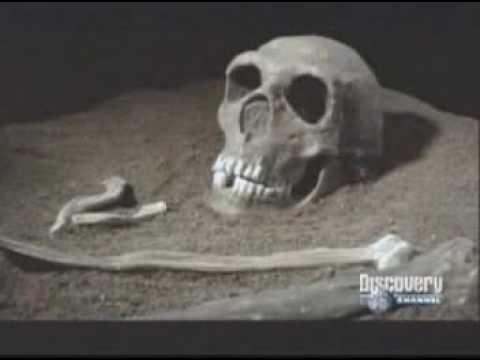 Los Neandertal. Discovery