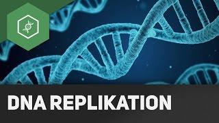 DNA Replikation - Wie funktioniert's?!