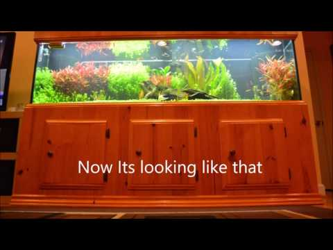 My 125 Gal Planted Aquarium With DIY Stand And Canopy