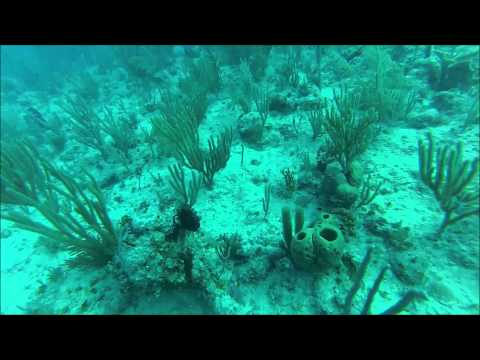 Two Tank Dive in Varadero, Cuba
