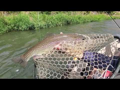 Dry Fly Fishing Tip // Walking The Dog!