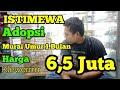 Harga Murai Batu Umur  Bulan  Mp3 - Mp4 Download