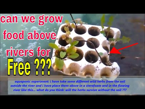 Experiment: Can We Grow Our Food For Free Above OR INSIDE In